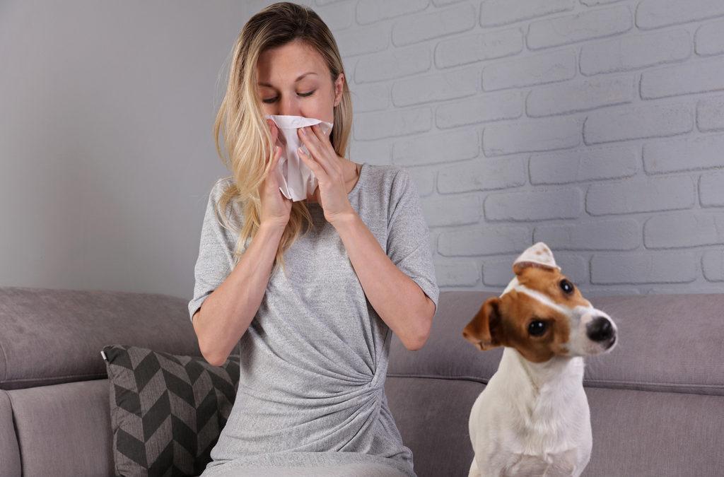 <b>Jak se zbavit alergie</b> na kočky a psy?