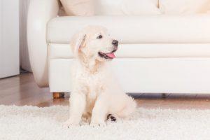 VIVENSO: vysavač pro domácnost se zvířaty